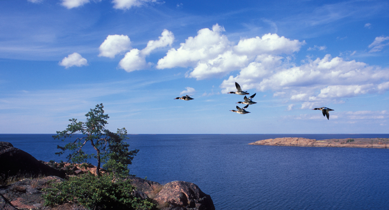 935598-the-nordic-archipelago-along-the-coast_web